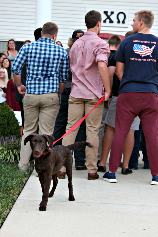 The Delt Puppy, Dexter, hung out alongside the men of Delta Tau Delta while they serenaded the women of Alpha Chi Omega. Dexter seemed to be enjoying himself while he entertained the sorority women, as well as the other fraternity men.