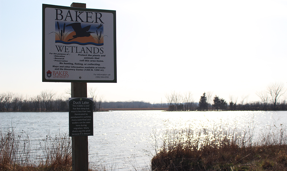 Duck Lake is one of many lakes in the 927 acres of land that is called the Baker Wetlands. There are hundreds of plant and bird species that can be found at the Baker Wetlands throughout the year.