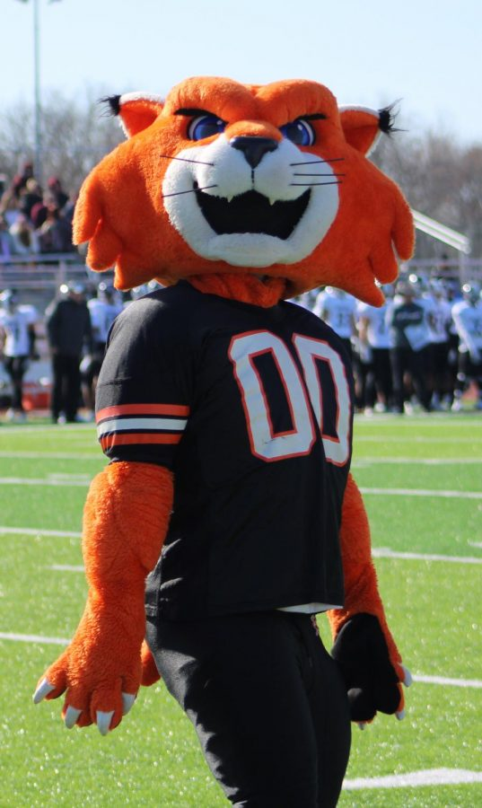 WOWzer participates with the cheer team on the sideline to cheer on the Wildcats. Wow-zer interacts with fans during the game against Evangel Crusaders on ESPN3.